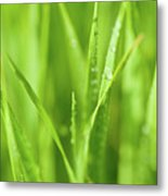 Native Prairie Grasses Metal Print