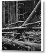 Natural Forest Metal Print