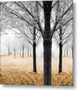 Nature - Mixed Season Metal Print