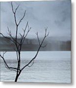 Nature -  The Naked Tree Metal Print