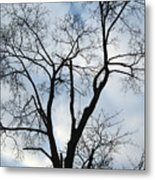 Nature - Tree In Toronto Metal Print