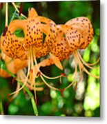 Nature Floral Orange Tiger Lily Flowers Baslee Troutman Metal Print