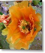Nature In The Wild - Cactus Honey Metal Print