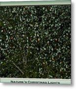 Nature's Christmas Lights Metal Print