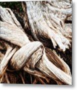 Nature's Twist - Bryce Canyon Metal Print