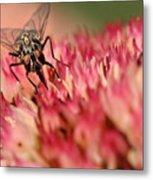 Nectar Hunt Metal Print