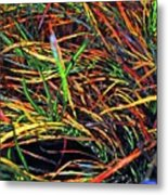 Needles Of Color Metal Print