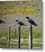 Neighborhood Watch Crows Metal Print