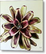 Neoregelia Painted Delight Metal Print by Penrith Goff