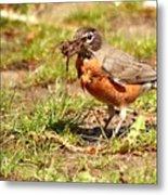 Nesting Collection ... Montana Art Photo Metal Print