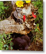 Newborn Foxes Metal Print