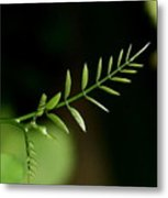 Newborn Leaves Metal Print