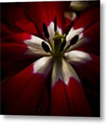 Night Lily One Metal Print