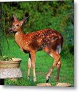 No I'm Not Bambi Metal Print