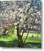 North American Magnolia Tree Metal Print