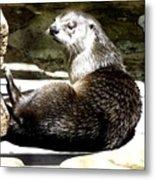 North American River Otter Metal Print