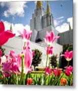Oakland Pink Tulips Metal Print