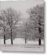 Oaks In Winter Metal Print by Gabriela Insuratelu
