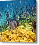 Oceans Below Metal Print
