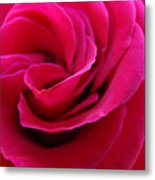 Office Art Rose Spiral Art Pink Roses Flowers Giclee Prints Baslee Troutman Metal Print