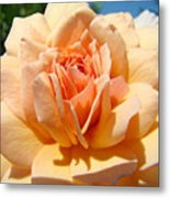 Office Artwork Roses Peach Rose Flower Giclee Baslee Troutman Metal Print