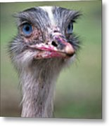 Ol Blue Eyes Metal Print