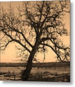 Old Crooked Tree Overlooking Mississippi River Metal Print