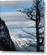 Old Larch Tree Has Best View Metal Print