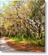 Old Oak Trees And Moss Metal Print
