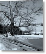 Old Tree Metal Print