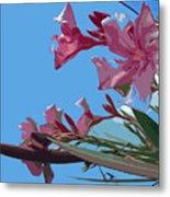 Oleander Flowers Wilting In The Brutal Florida Sun    Metal Print