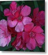 Oleanders In Pink Metal Print