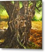 Olive Tree Rooted 1 Metal Print