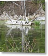 On The Pond Metal Print