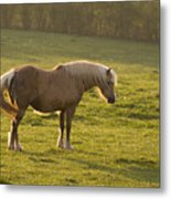 On The Sunny Meadow Metal Print