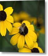 One Bee Over The Flower's Nest Metal Print