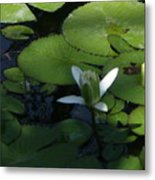 One White Petal Close-up Metal Print