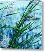 Only The Wind Knows Metal Print
