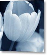 Opening Tulip Flower Blue Monochrome Metal Print