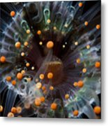Orange And Black Anemone, Komodo Metal Print