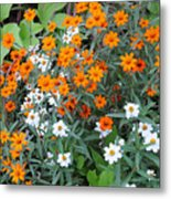 Orange And White Metal Print