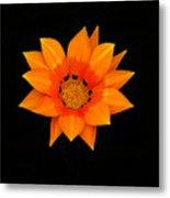 Orange Daisy Metal Print