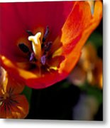 Orange Delight Metal Print by Don  Wright