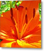 Orange Lily Flower Art Print Summer Lily Garden Baslee Troutman Metal Print
