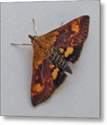 Orange Mint Moth - Pyrausta Orphisalis Metal Print