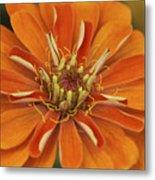 Orange Orange Orange Metal Print