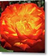 Orange Red Rose Flower Art Prints Giclee Baslee Troutman Metal Print