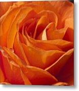 Orange Rose 2 Metal Print