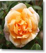 Orange Rose Square Metal Print