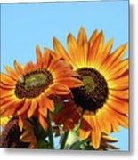Orange Sunflowers Summer Blue Sky Art Prints Baslee Metal Print